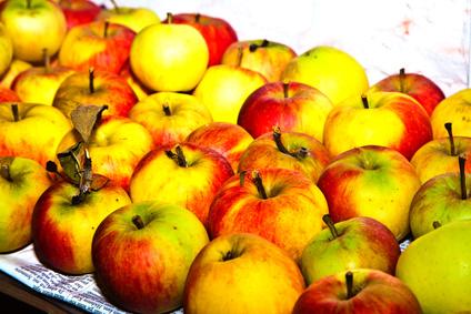 jablka ke skladování