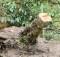 Nemocné dřeviny